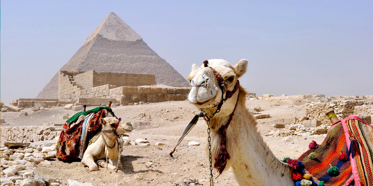 Excursión al Museo Egipcio y El Cairo Viejo, incluida El Museo Nacional de la Civilización