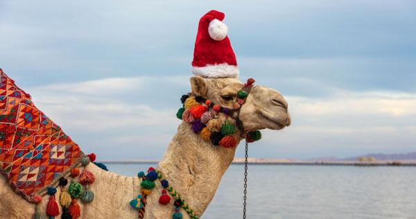 Viajes a Egipto en Navidad