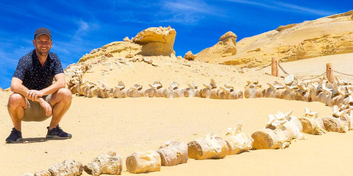 Excursión desde El Cairo a Wadi El Hitan