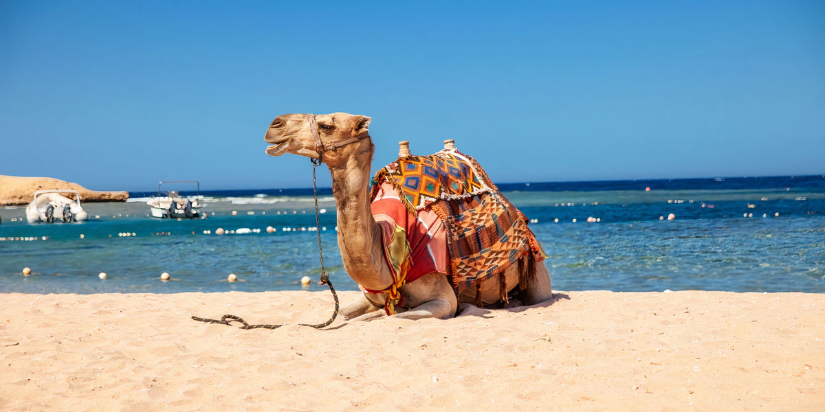 Viaje Accesible de 10 Días en El Cairo, Hurgada y Crucero por el Nilo