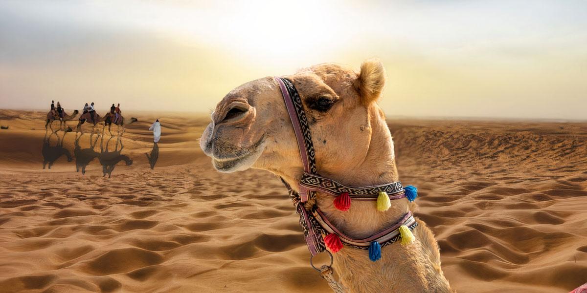 10 Días al Desierto de Sahara, El Cairo y Crucero por el Nilo